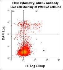 ABCB5 Antibody in Flow Cytometry (Flow)