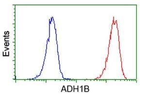 ADH1B Antibody in Flow Cytometry (Flow)