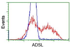 ADSL Antibody in Flow Cytometry (Flow)