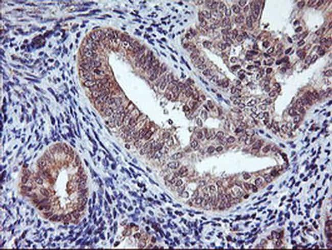 AGPAT5 Antibody in Immunohistochemistry (Paraffin) (IHC (P))