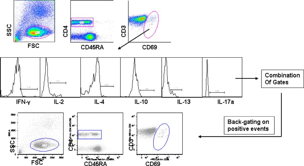 IL-10 Antibody