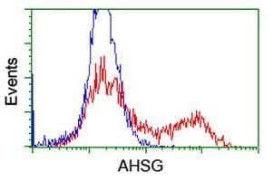 AHSG Antibody in Flow Cytometry (Flow)
