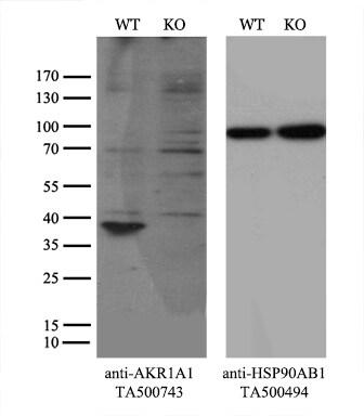 AKR1A1 Antibody in Knockout