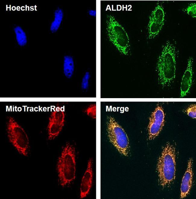 ALDH2 Antibody in Orthogonal method