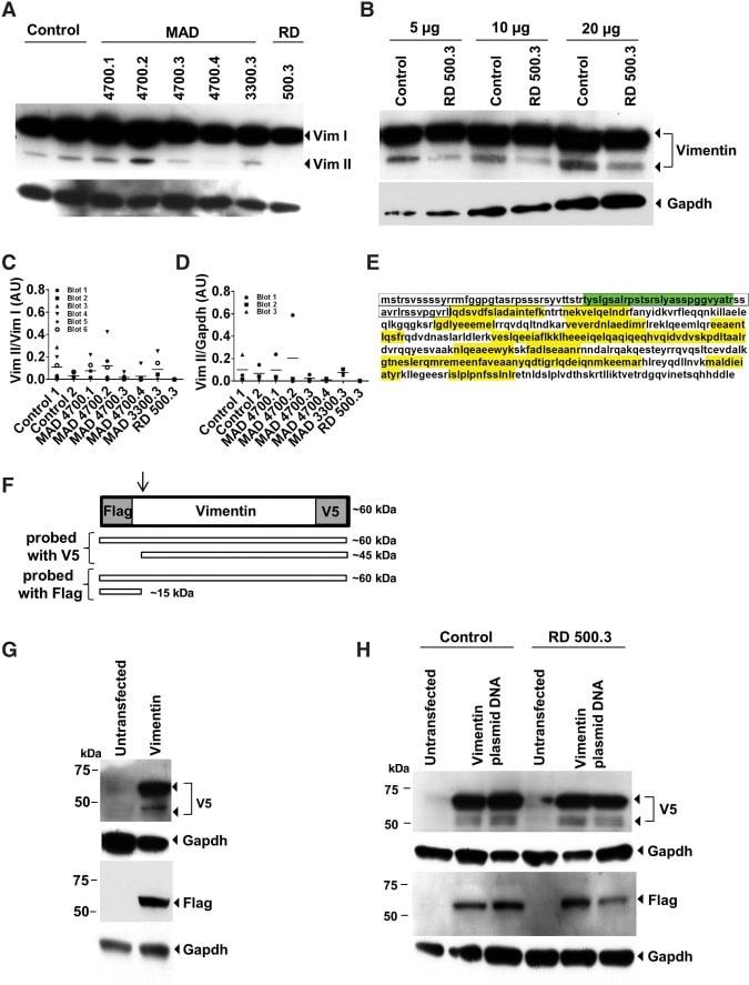 gapdh antibody  monoclonal  6c5