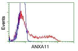 ANXA11 Antibody in Flow Cytometry (Flow)