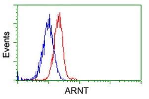 ARNT Antibody in Flow Cytometry (Flow)