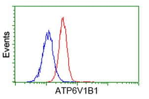 ATP6V1B1 Antibody in Flow Cytometry (Flow)
