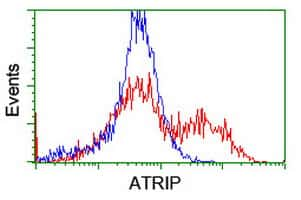 ATRIP Antibody in Flow Cytometry (Flow)