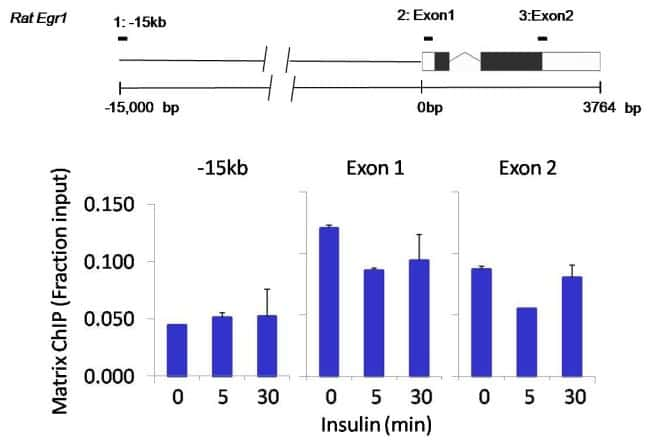Acetyl-Histone H3 (Lys9) Antibody in ChIP assay (ChIP)