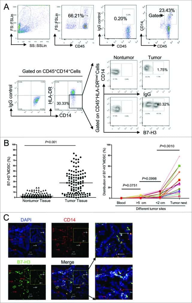 CD276 (B7-H3) Antibody