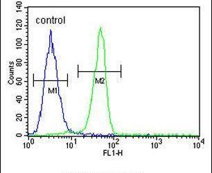Biglycan Antibody in Flow Cytometry (Flow)