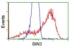 BIN3 Antibody in Flow Cytometry (Flow)