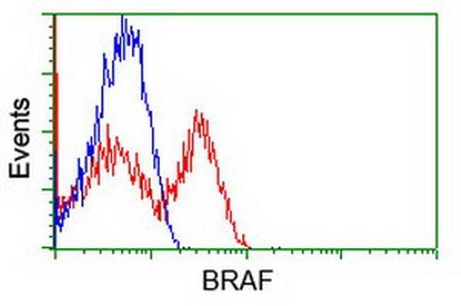 BRAF Antibody in Flow Cytometry (Flow)