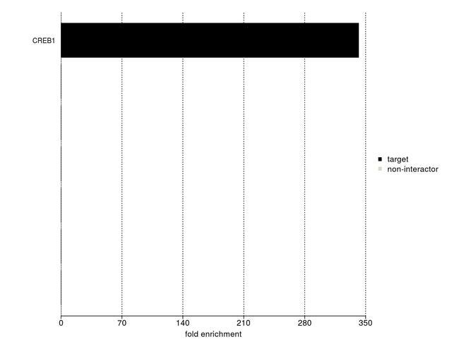 CREB Antibody in IP-MS