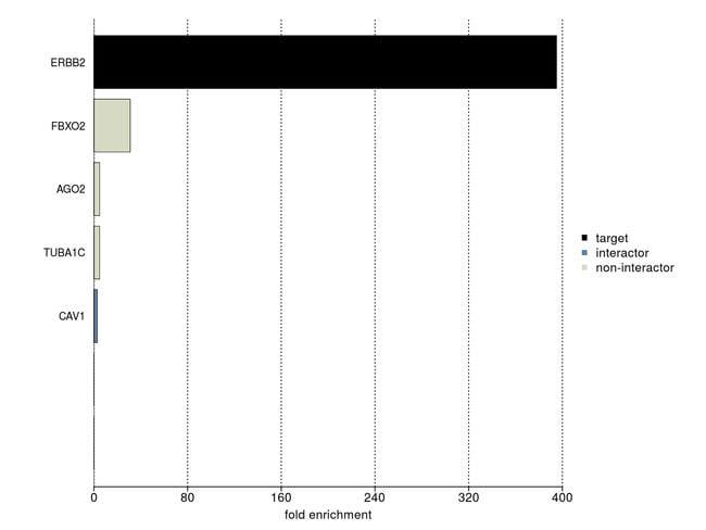 ErbB2 (HER-2) Antibody in IP-MS