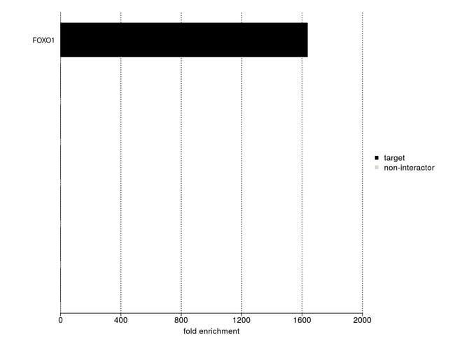 FOXO1 Antibody in IP-MS