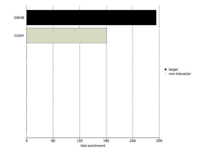 GSK3B Antibody in IP-MS