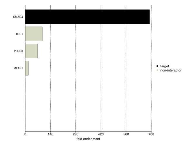 SMAD4 Antibody in IP-MS
