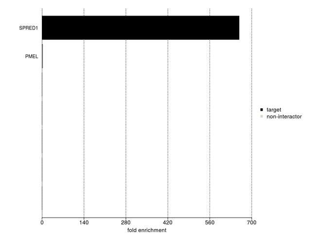 SPRED1 Antibody in IP-MS