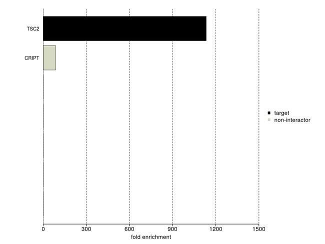 TSC2 Antibody in IP-MS (IP-MS)