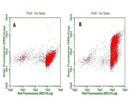 BrdU Antibody in Flow Cytometry (Flow)