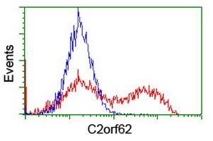 C2orf62 Antibody in Flow Cytometry (Flow)