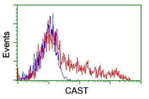 CAST Antibody in Flow Cytometry (Flow)
