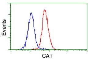 CAT Antibody in Flow Cytometry (Flow)