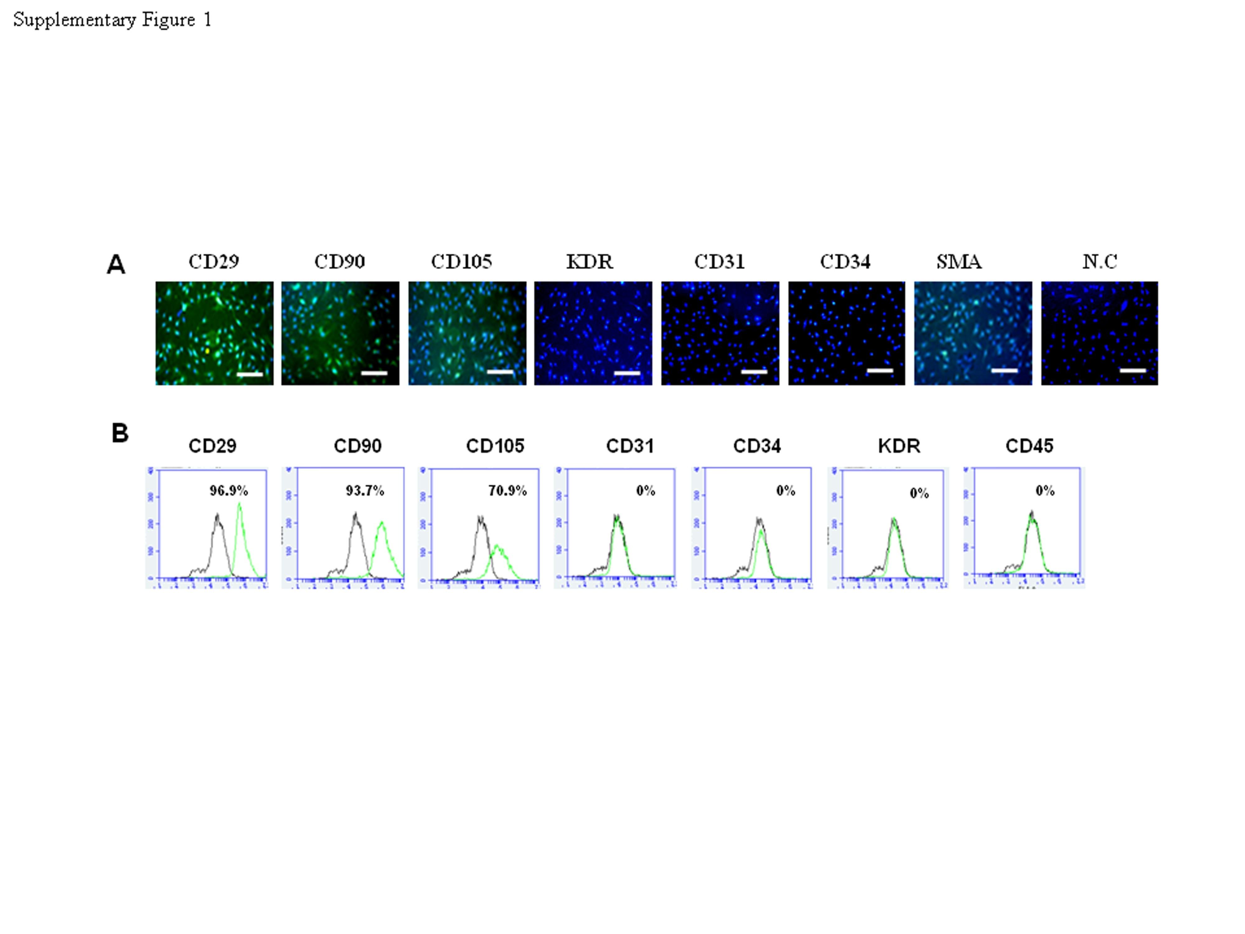 CD105 Antibody