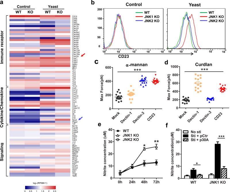CD11b Antibody, eFluor® 450 (Monoclonal, M1/70)