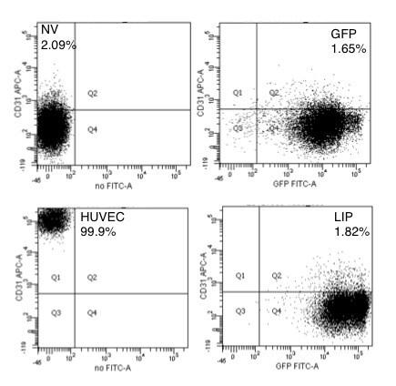 CD31 (PECAM-1) Antibody