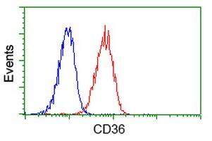 CD36 Antibody in Flow Cytometry (Flow)