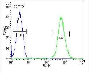 CD37 Antibody in Flow Cytometry (Flow)