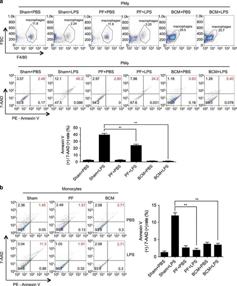 CD284 (TLR4) Antibody