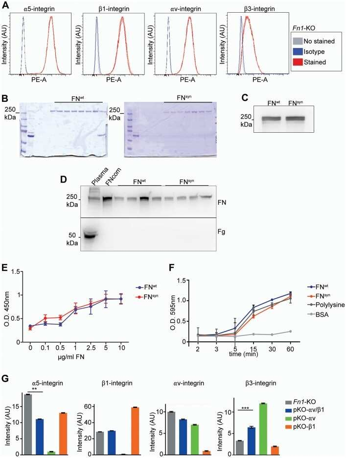 CD61 (Integrin beta 3) Antibody