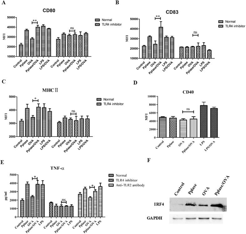 CD83 Antibody