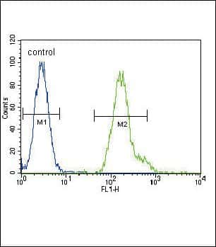 C/EBP alpha Antibody in Flow Cytometry (Flow)
