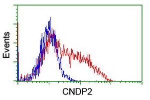 CNDP2 Antibody in Flow Cytometry (Flow)