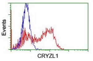 CRYZL1 Antibody in Flow Cytometry (Flow)