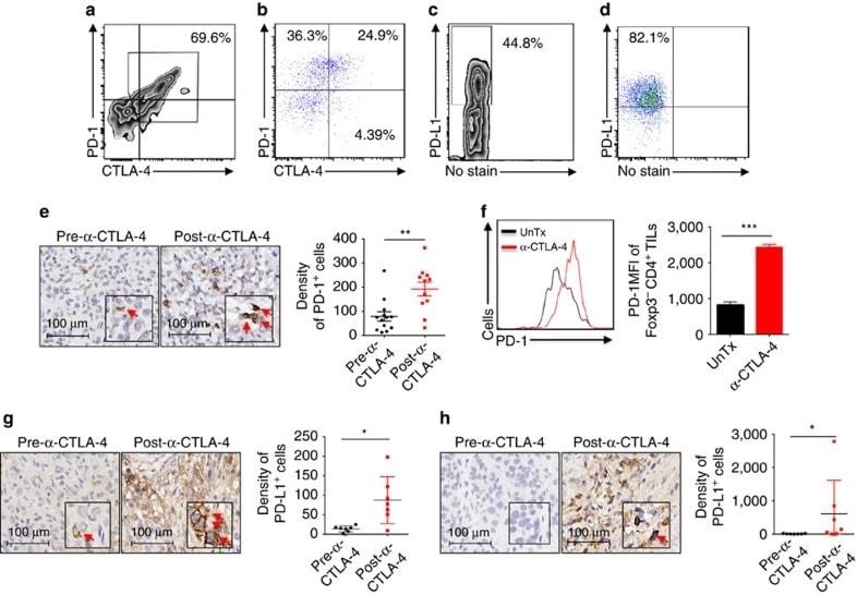 CD152 (CTLA-4) Antibody