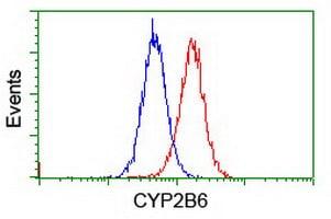 CYP2B6 Antibody in Flow Cytometry (Flow)