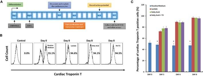 Cardiac Troponin T Antibody