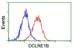 DCLRE1B Antibody in Flow Cytometry (Flow)