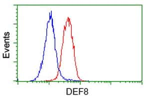 DEF8 Antibody in Flow Cytometry (Flow)