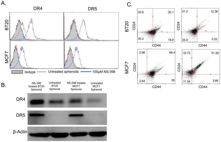 CD261 (DR4) Antibody