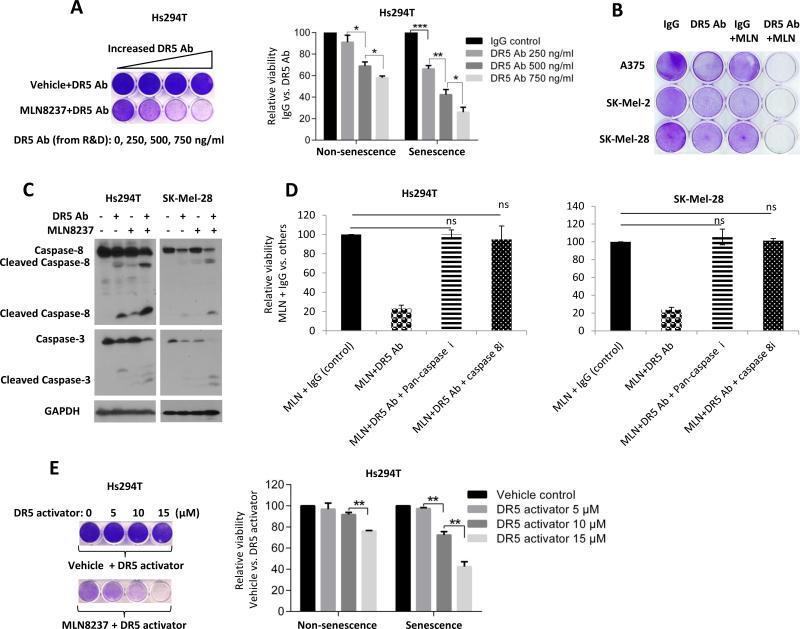 CD262 (DR5) Antibody