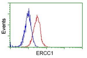 ERCC1 Antibody in Flow Cytometry (Flow)