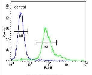 ERO1LB Antibody in Flow Cytometry (Flow)