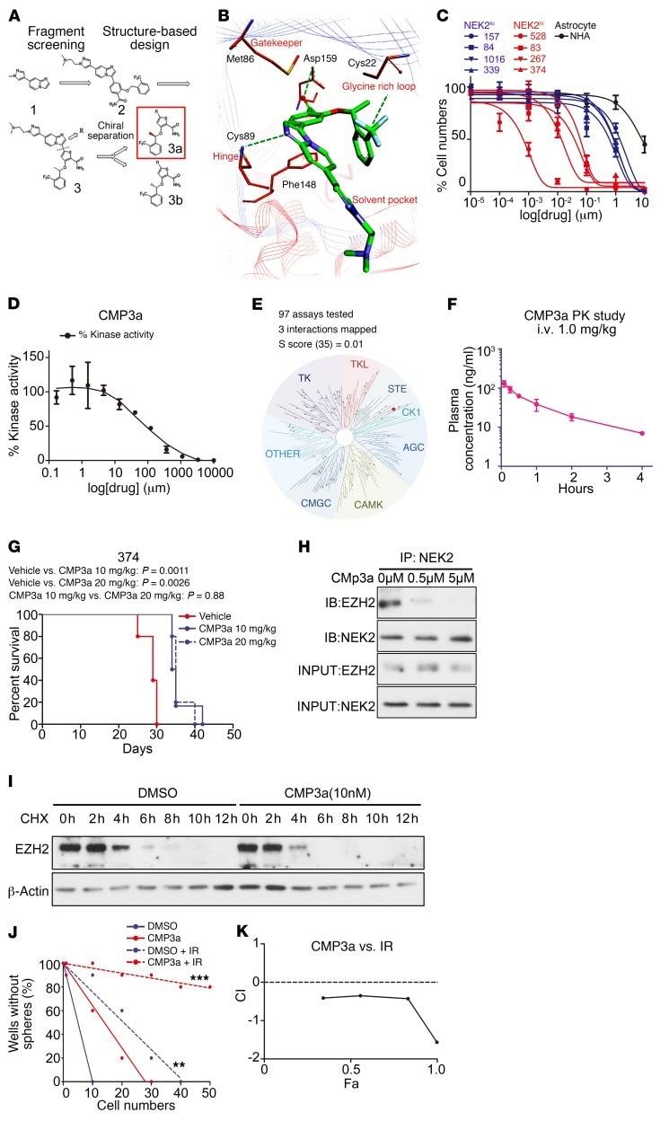 NEK2 Antibody